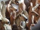 Animaux CERAMOSA - Fabricant à - Sculpture