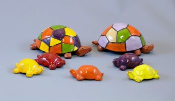 Famille Tortue multicolore
