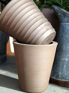 Pots Cycas